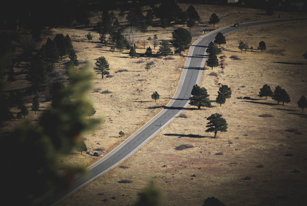 bird's eye view photography of road and trees