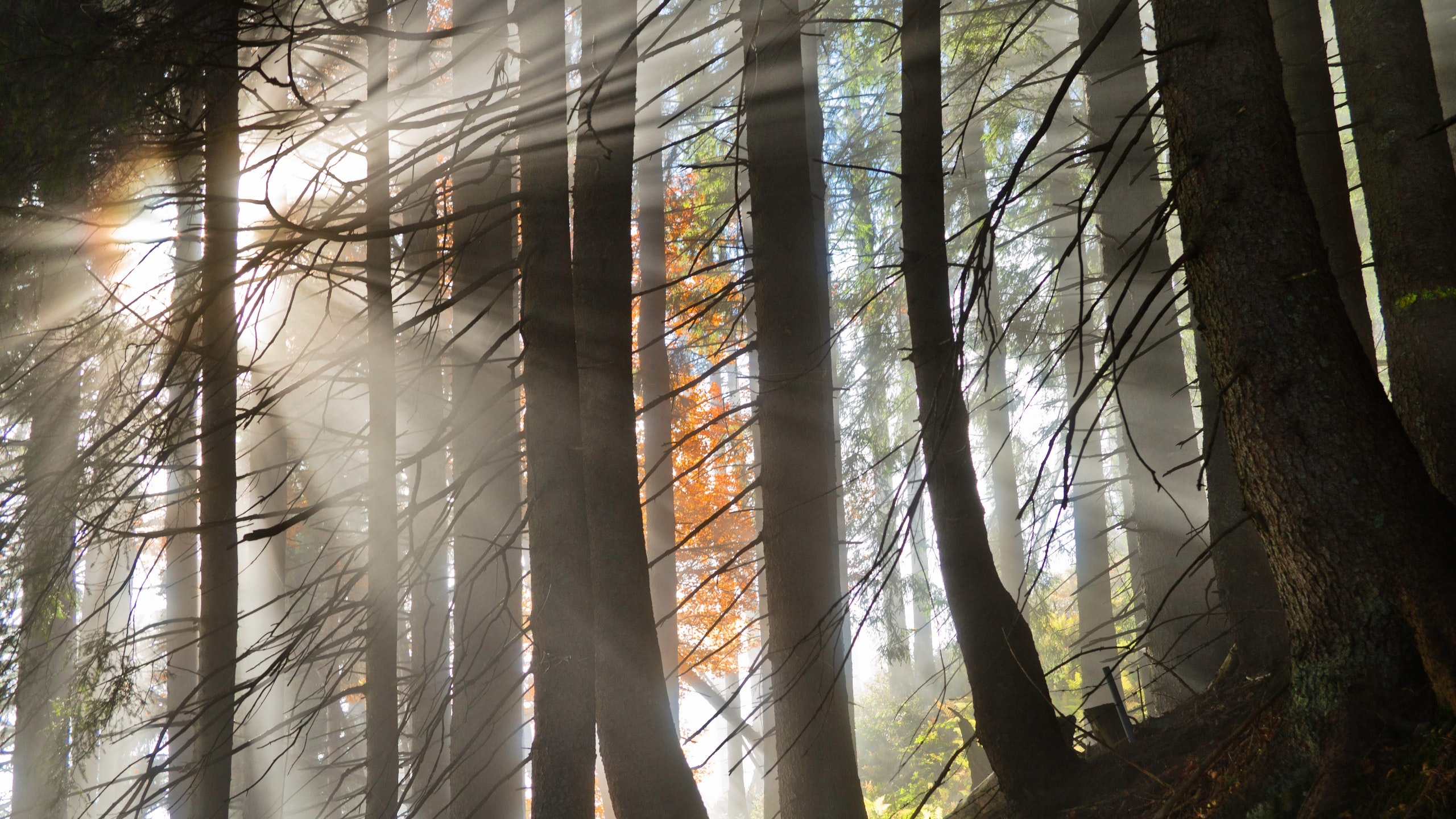 landscape photography of forest with sunlight passes through