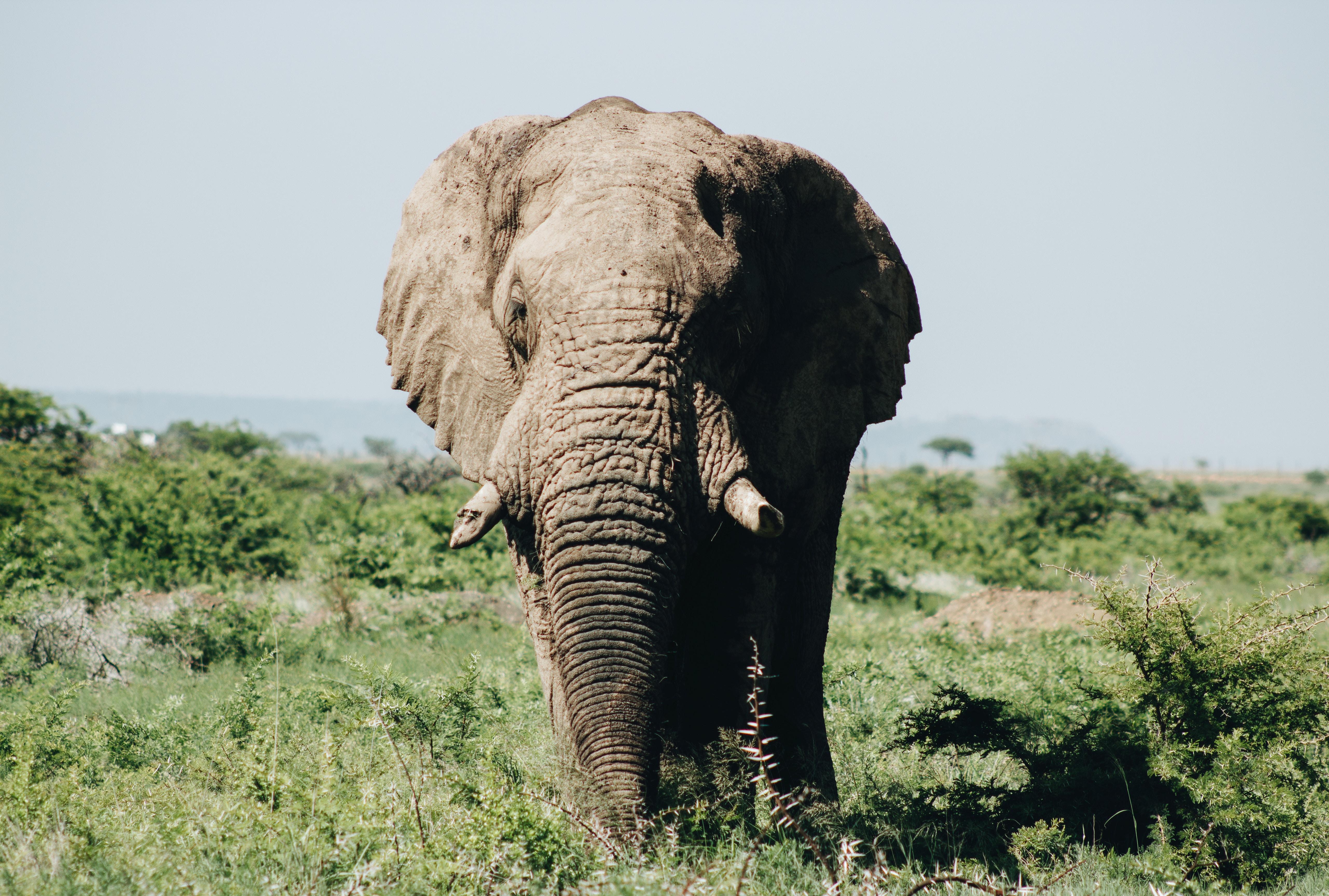 black elephant of green grass