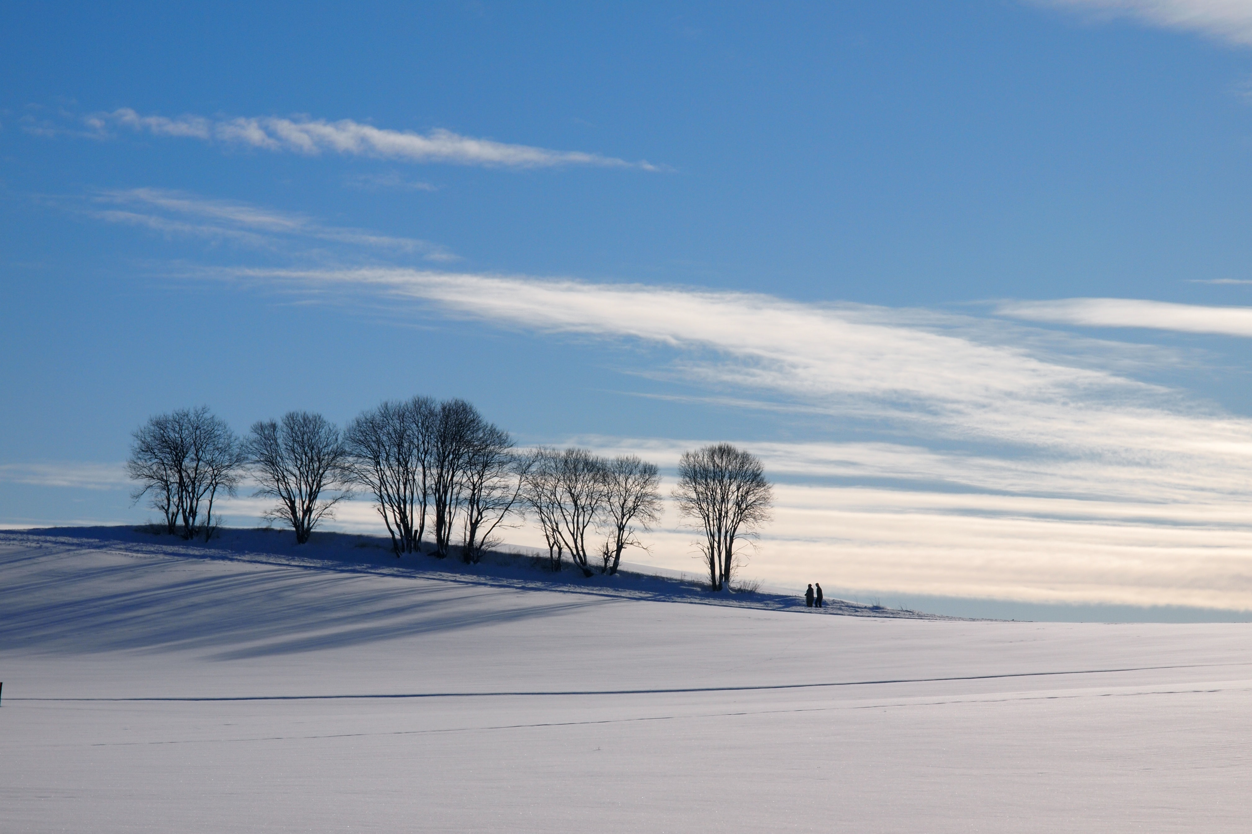 bare trees on snow covered ground