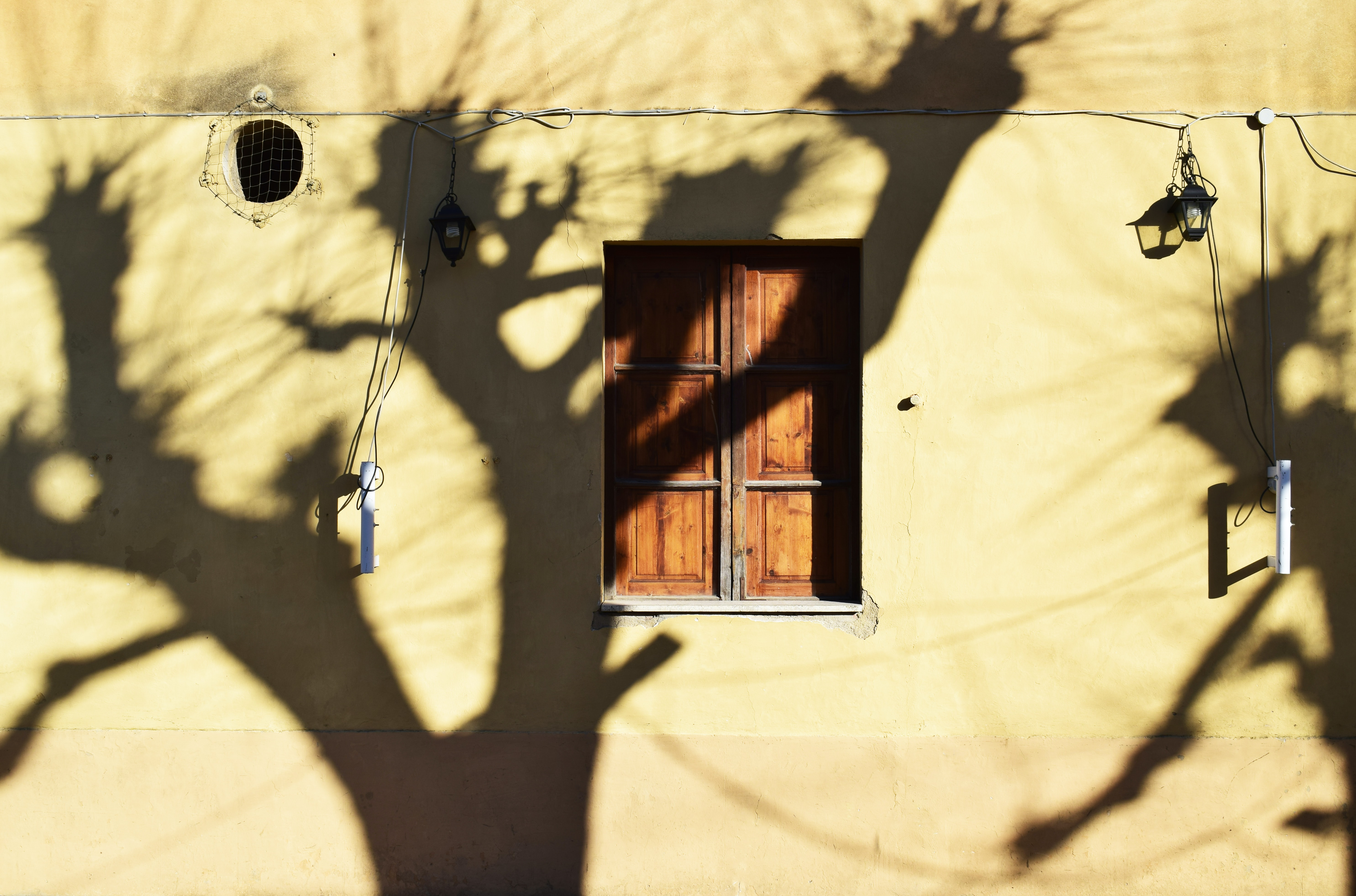 shadow of trees reflecting on beige wall