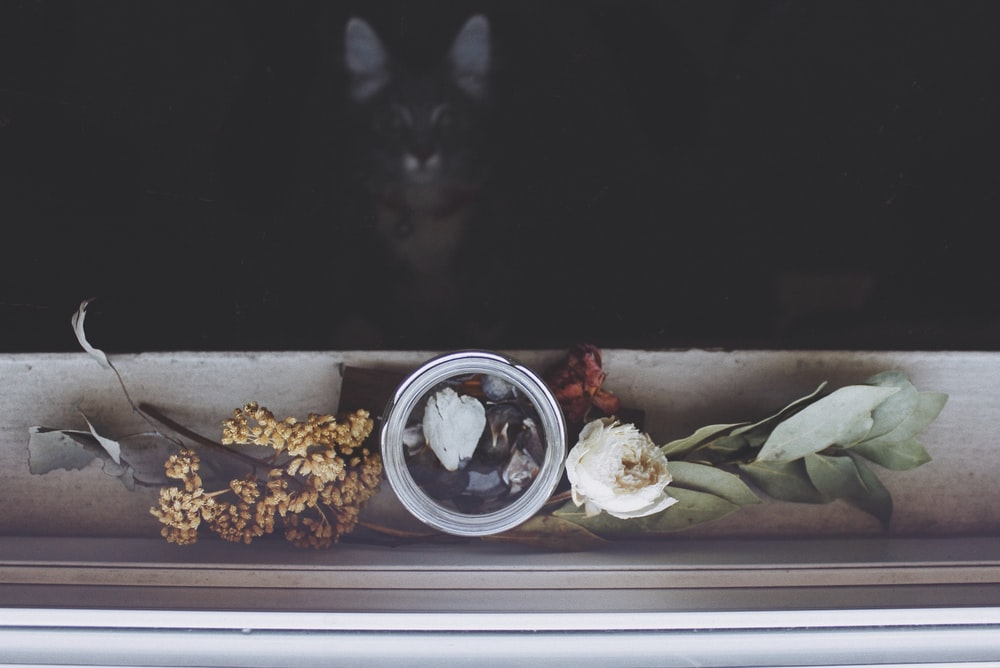 photo of white pot with flower beside window