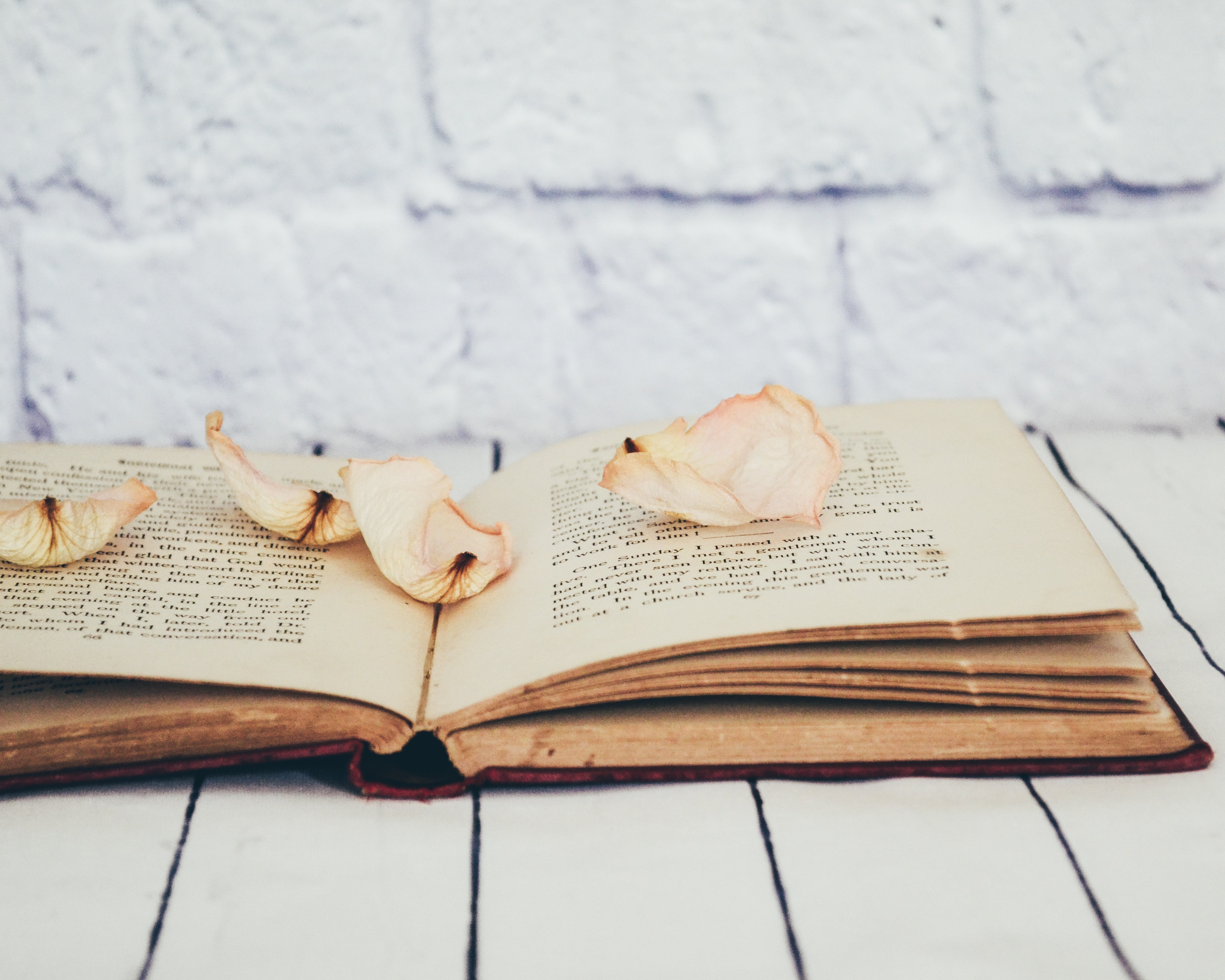 flower petals on opened book