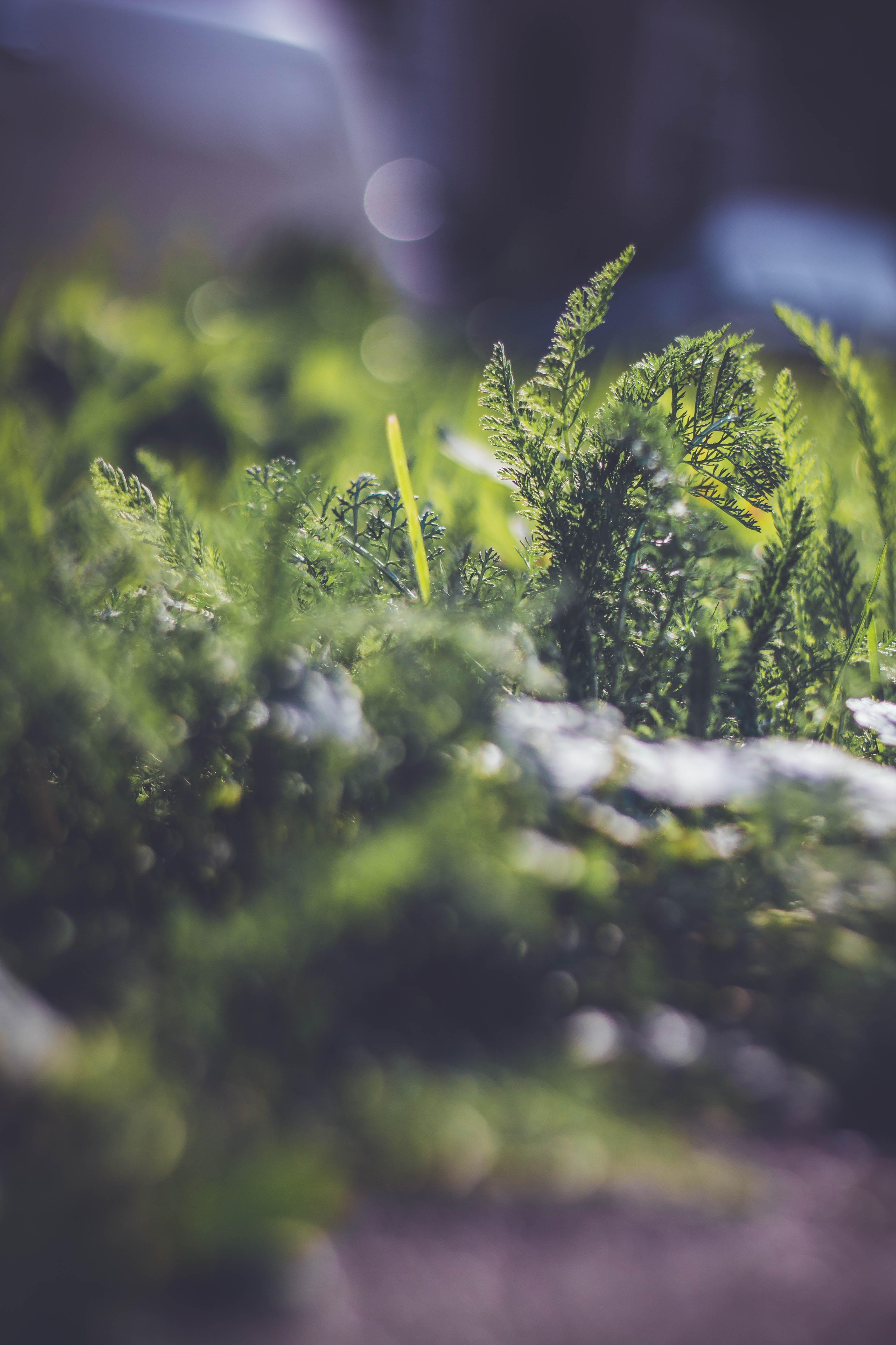 tilt-shift photography of green plants