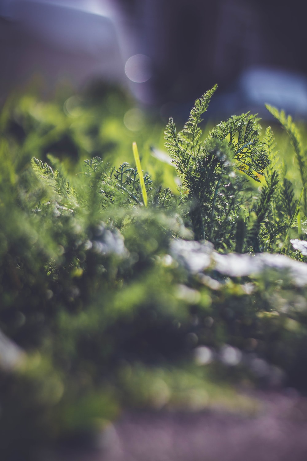 tilt-shift photography of green plants