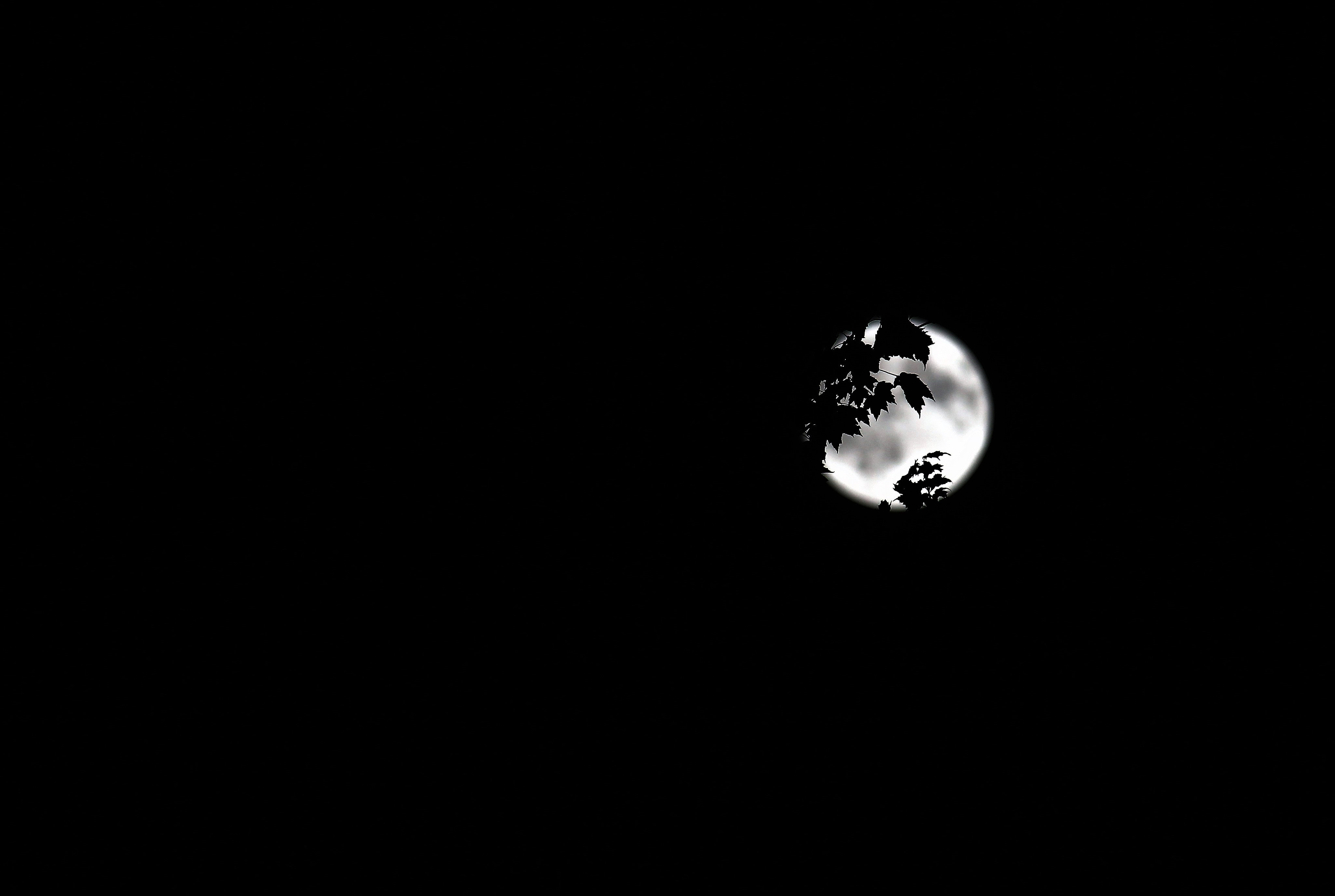 low angle photo of full moon