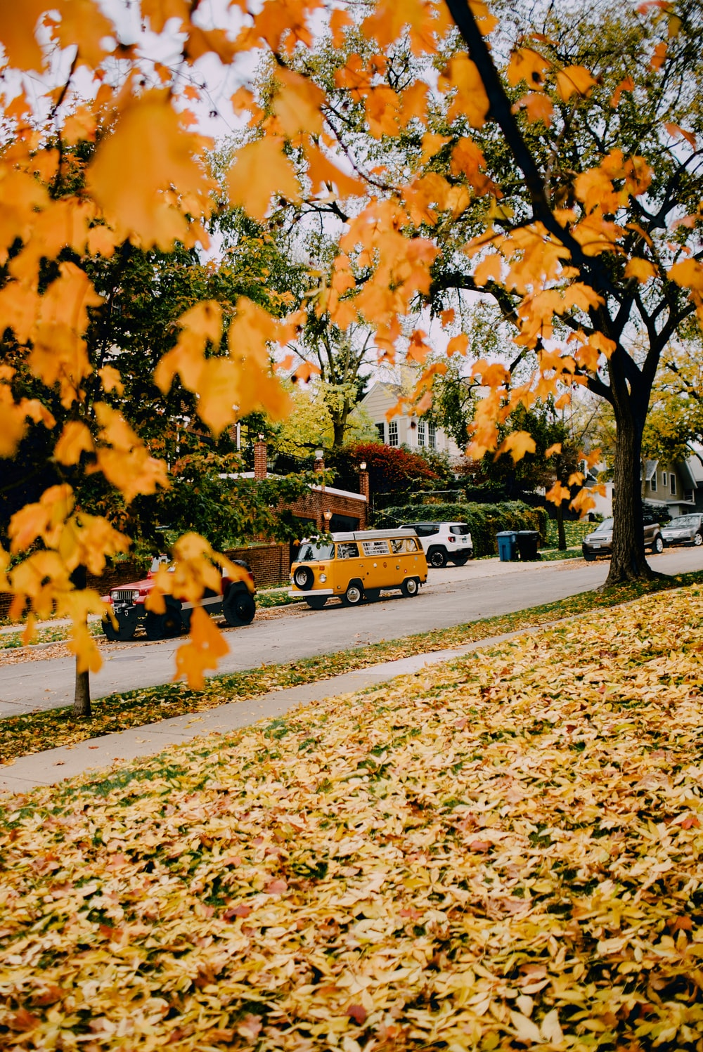 photo of orange leaves