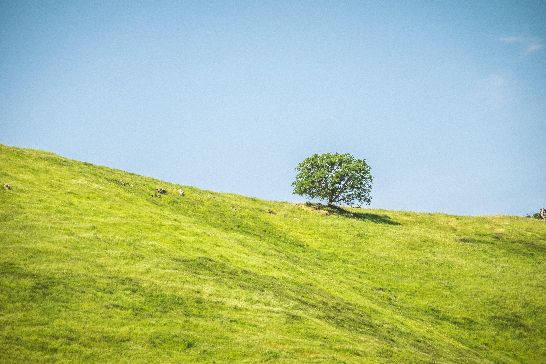 tree on body of mountain