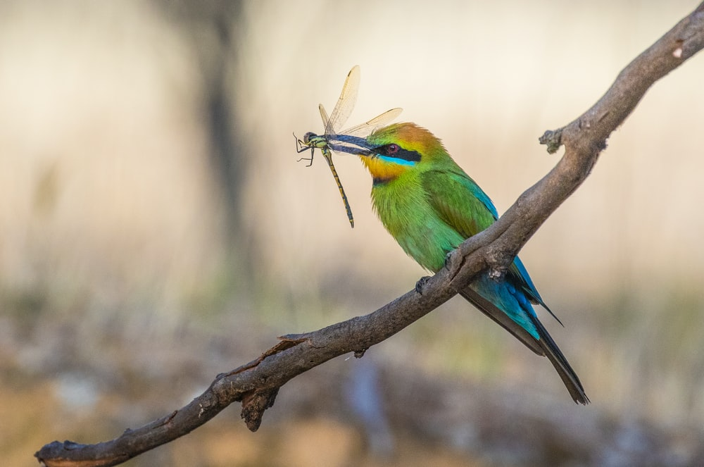 green bird with dragonfly with its mouth