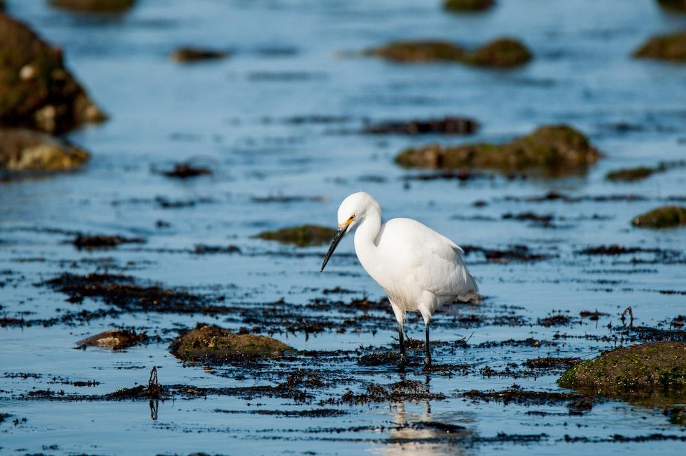 photo of white long-beaked bird on body of water