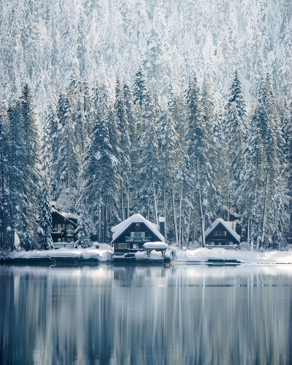 houses covered with snow near trees