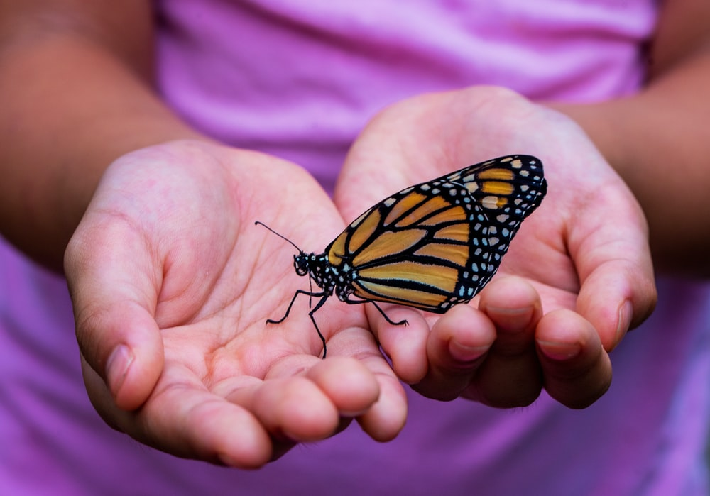 person holding yellow and black butterfly