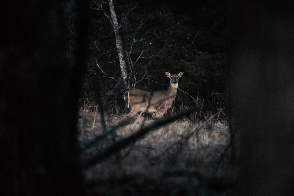 brown deer in forest