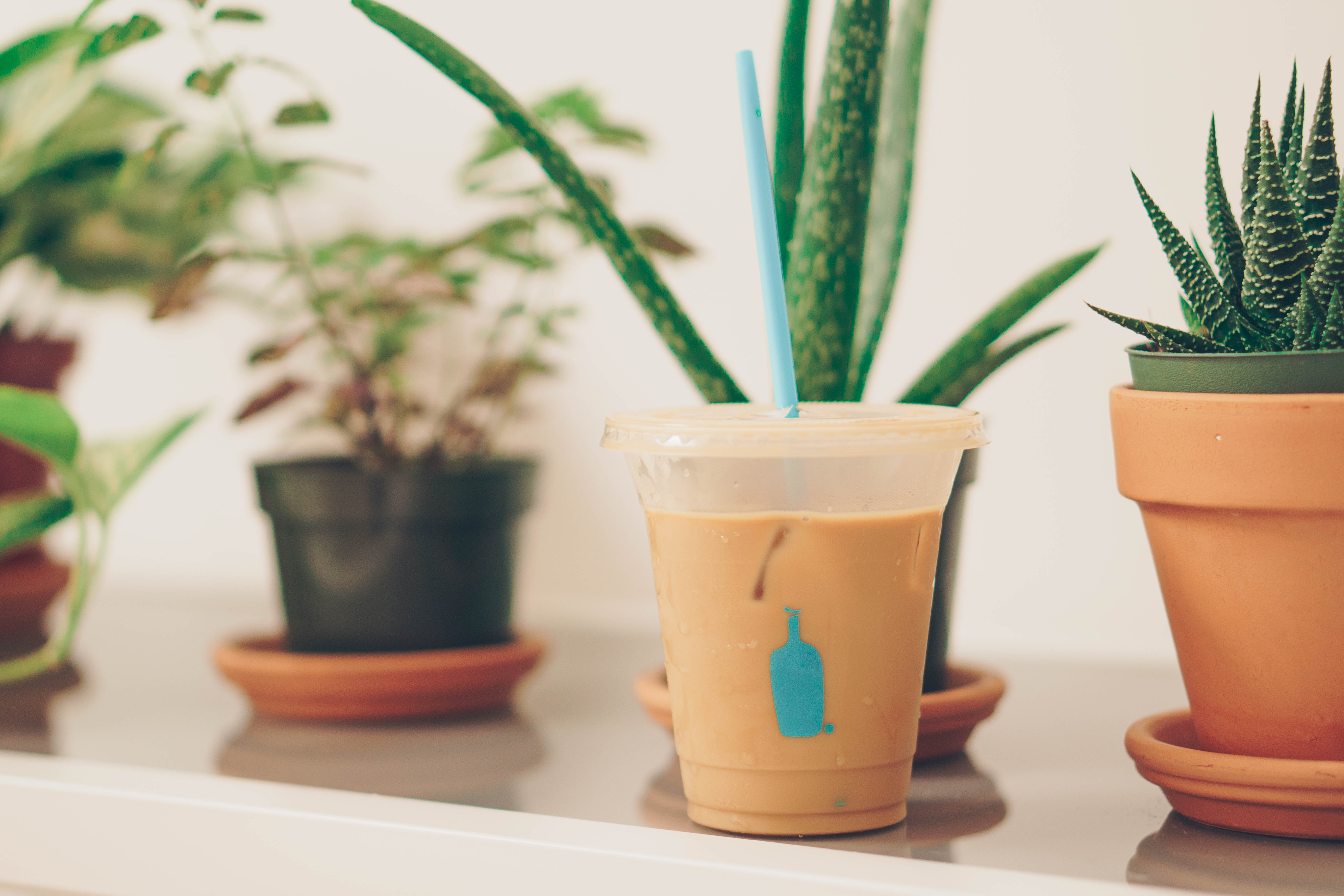 shallow focus photography of disposable cup beside plants