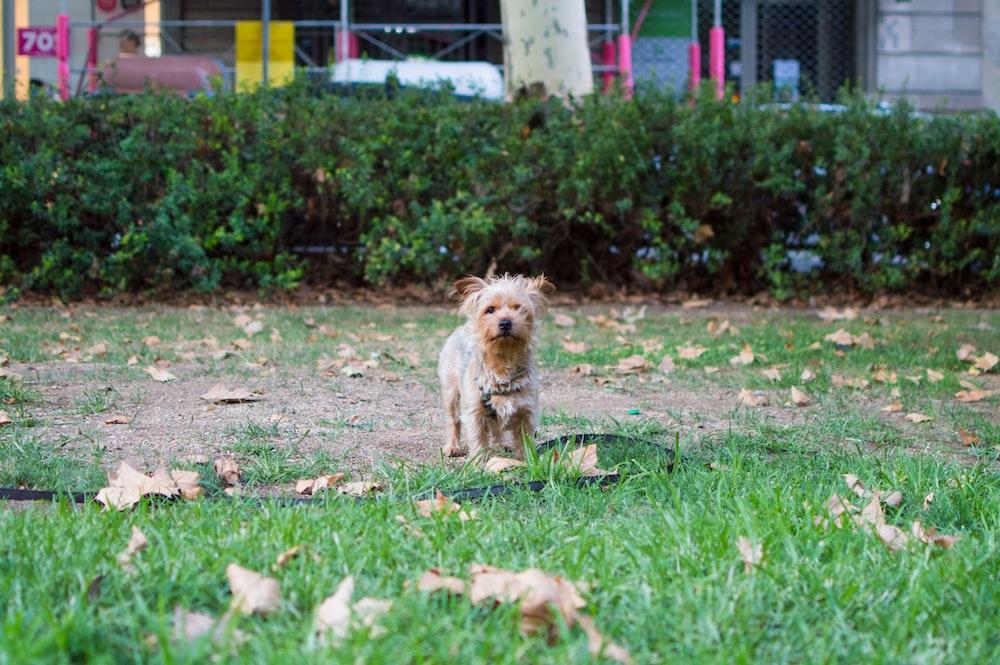 brown dog on green garden