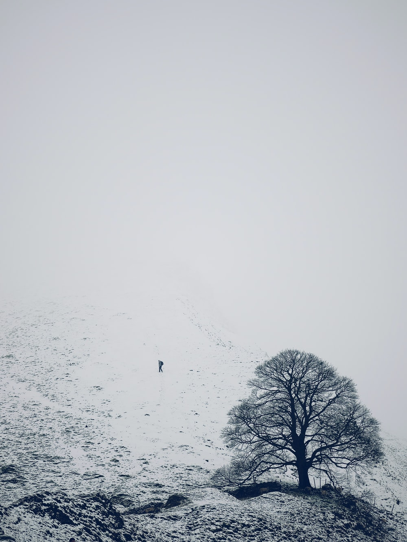 photo of tree near mountain