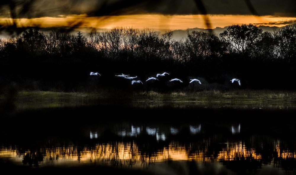 flying birds near body of water