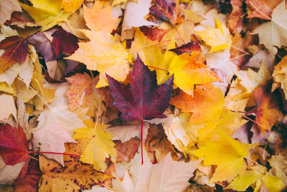 leaves pictures download free images on unsplash