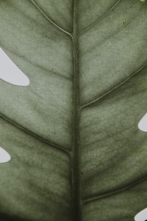 1603. Növények világa