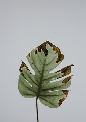 1651. Növények világa