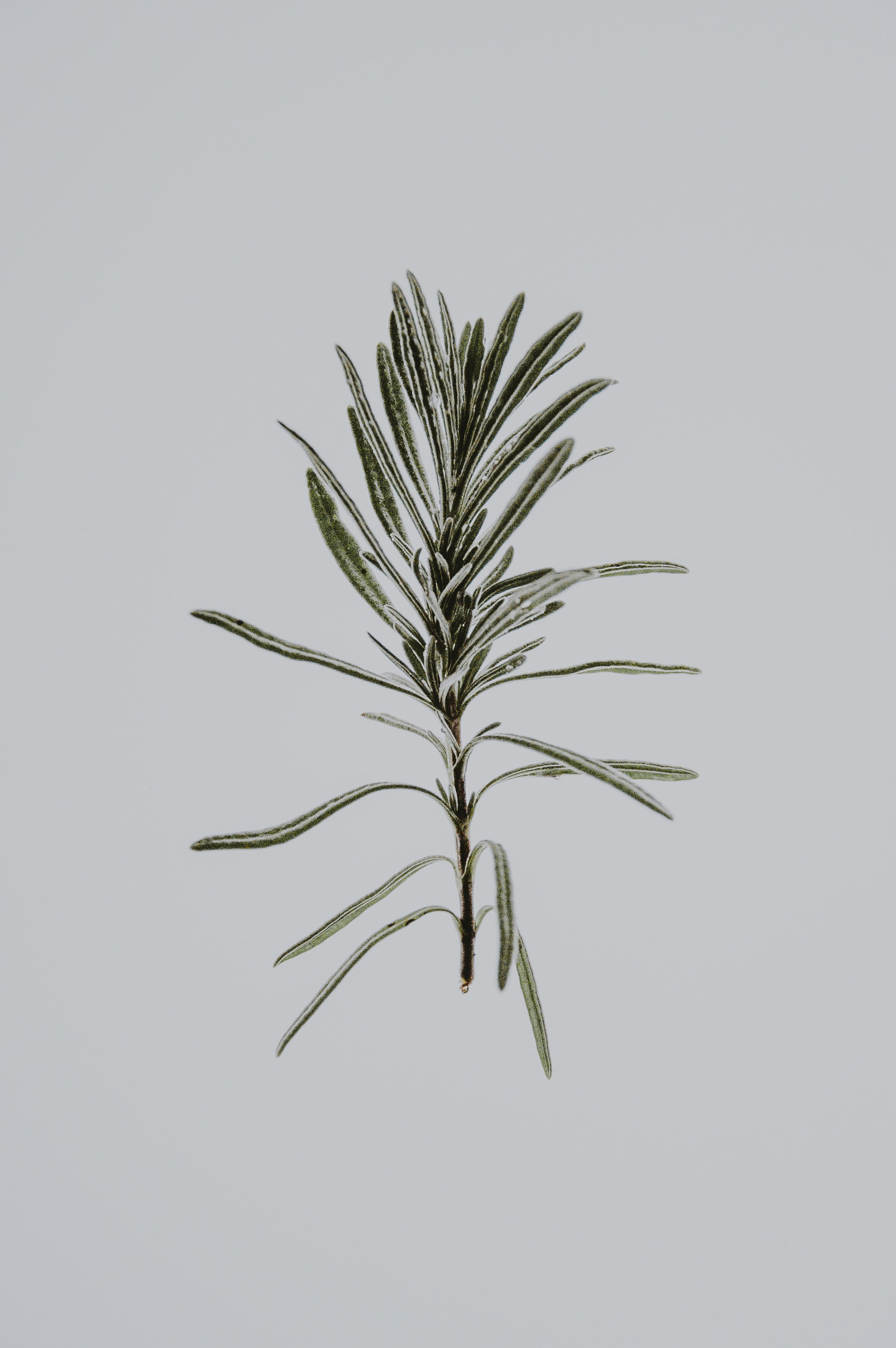 photo of green leafed plant