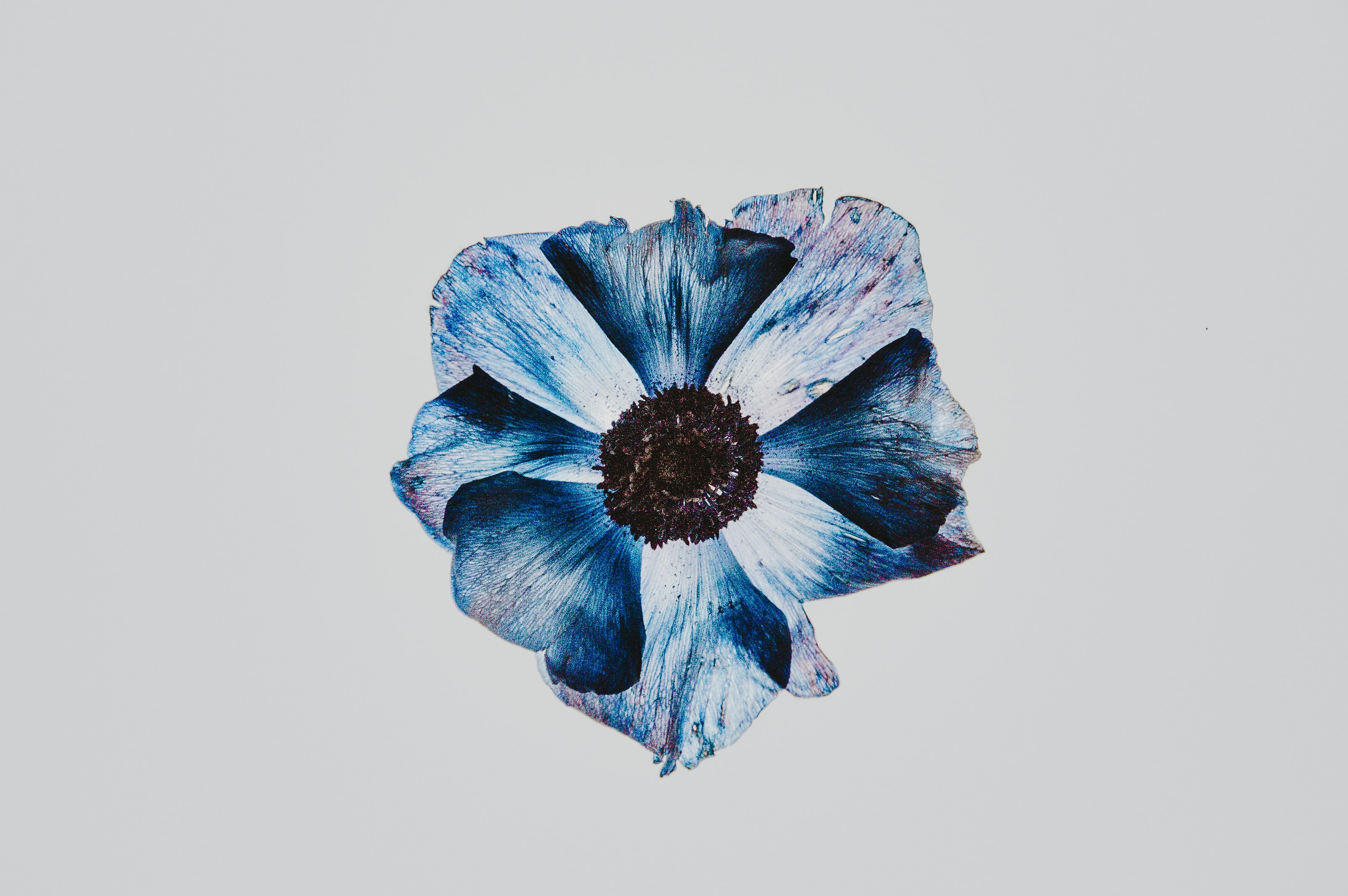 blue flower abstract painting