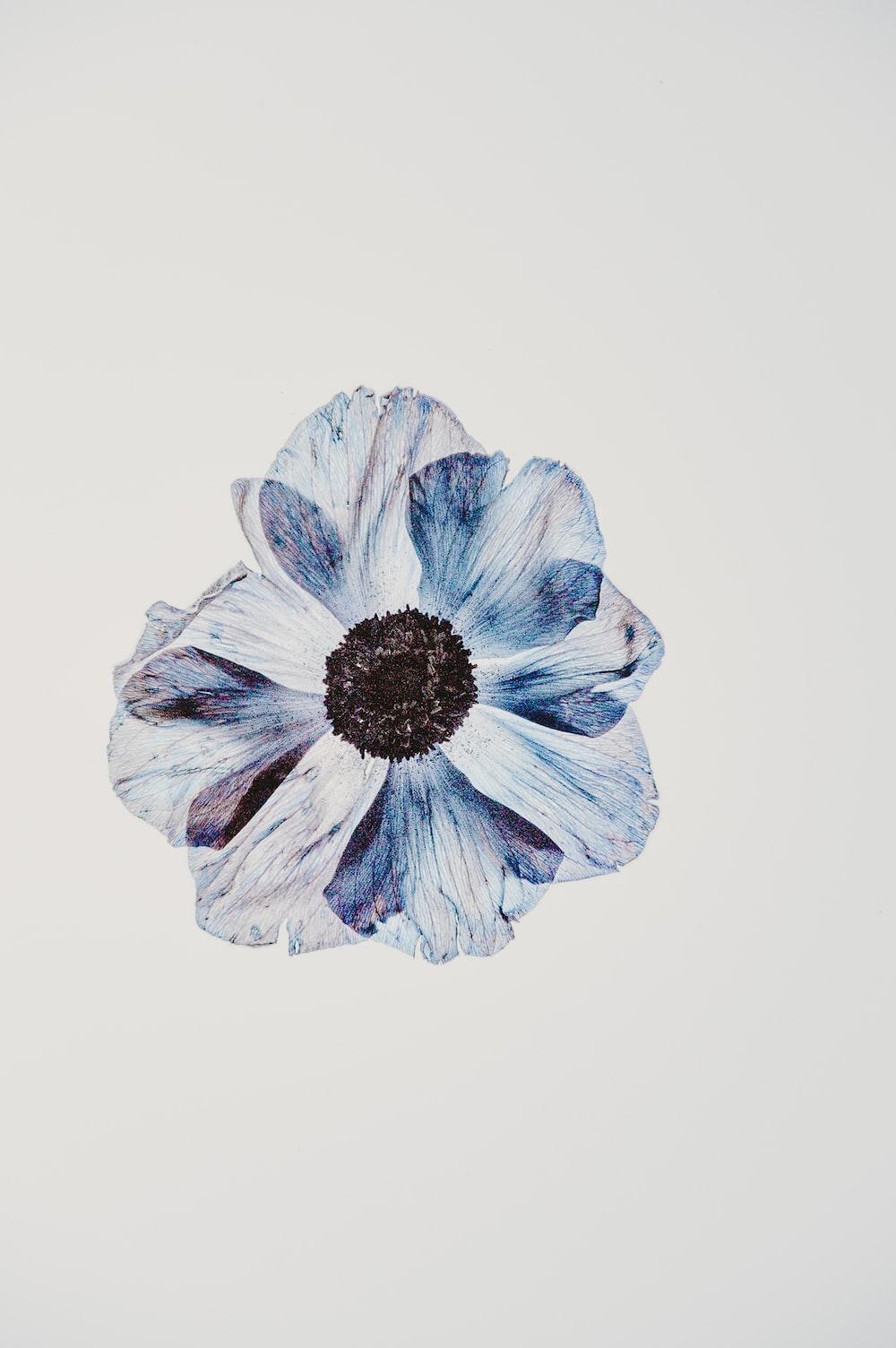 white and blue petaledd flower