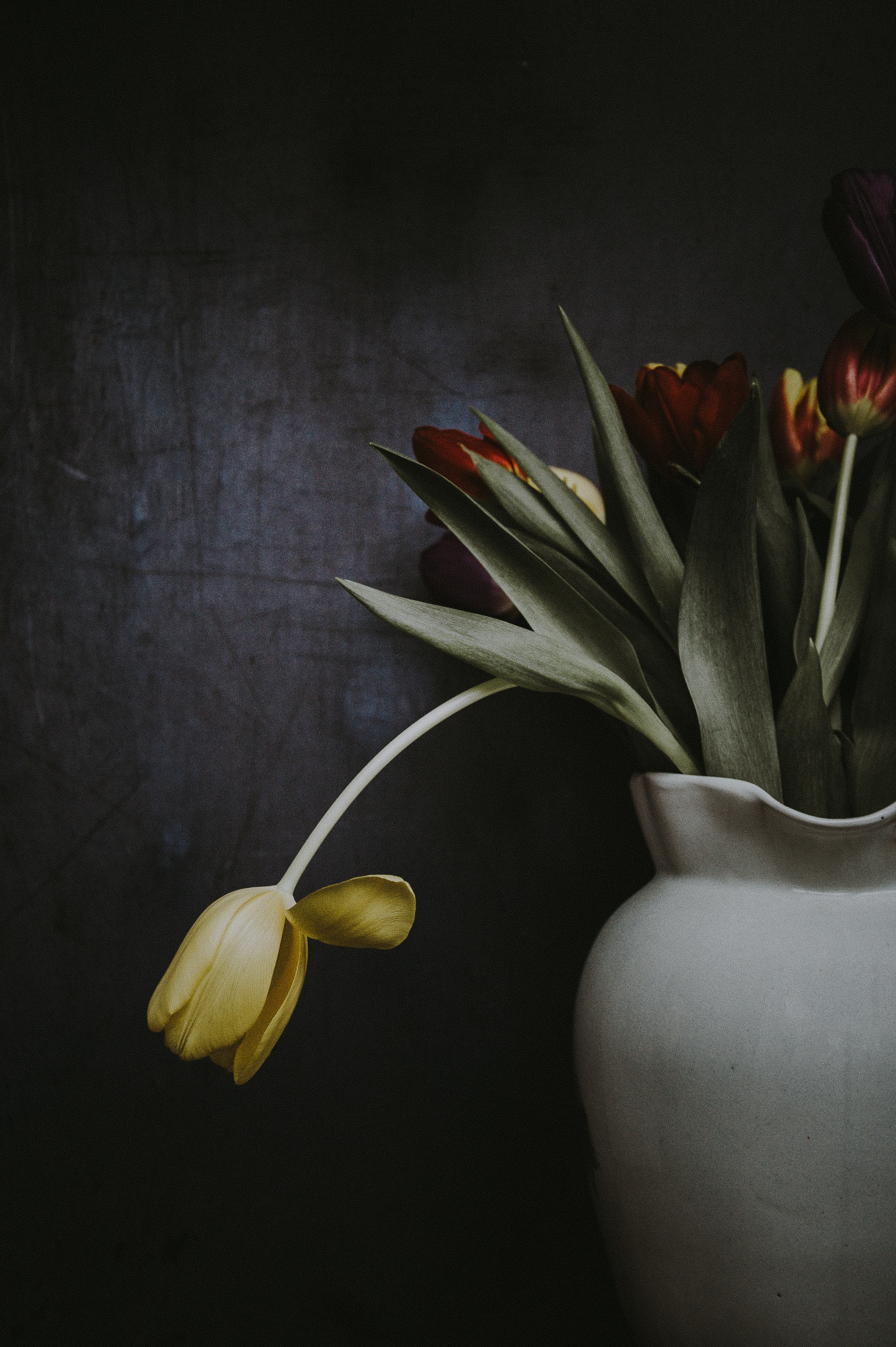 red and yellow tulips flowers on vase near wall
