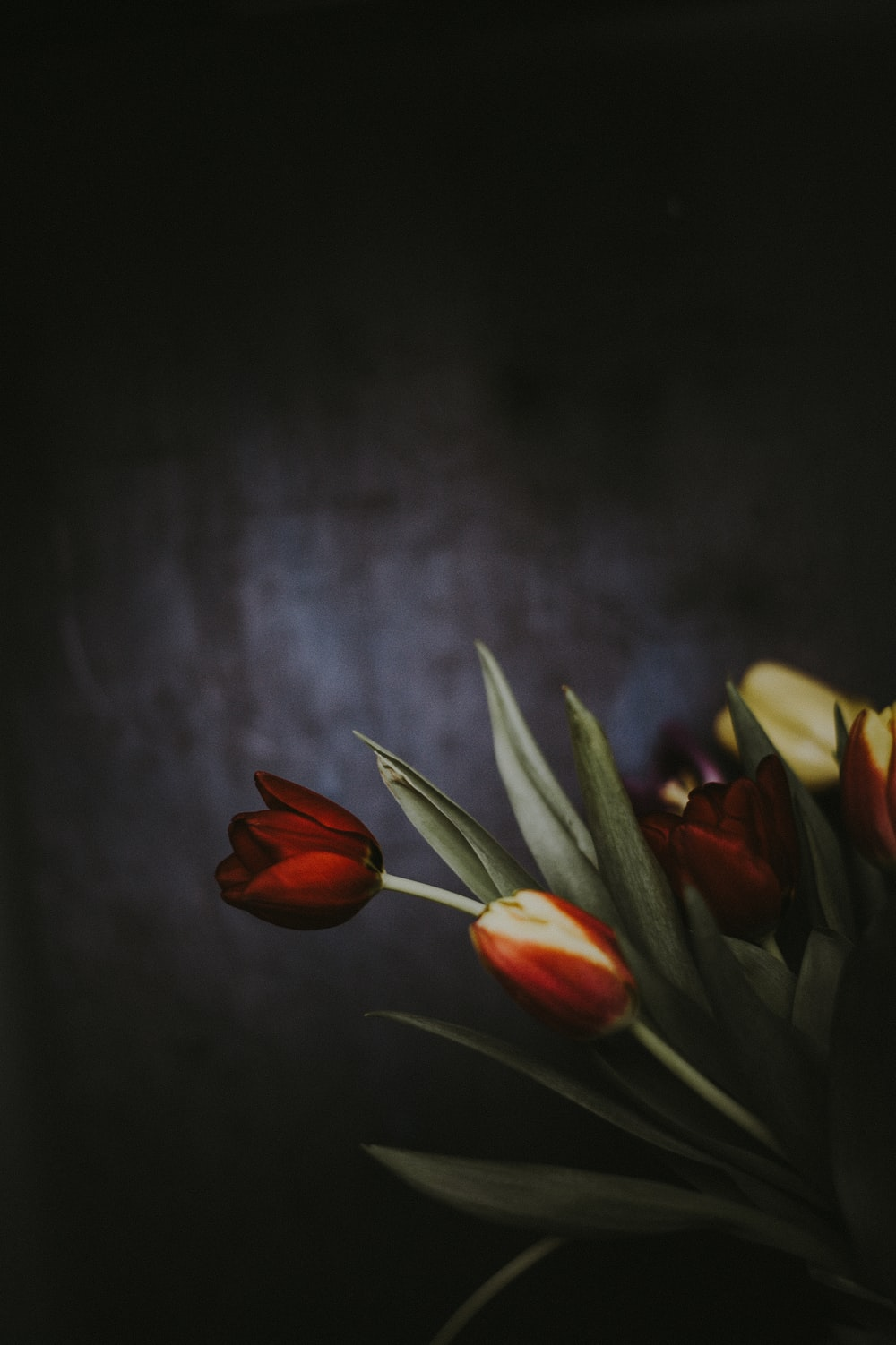 painting of red flowers