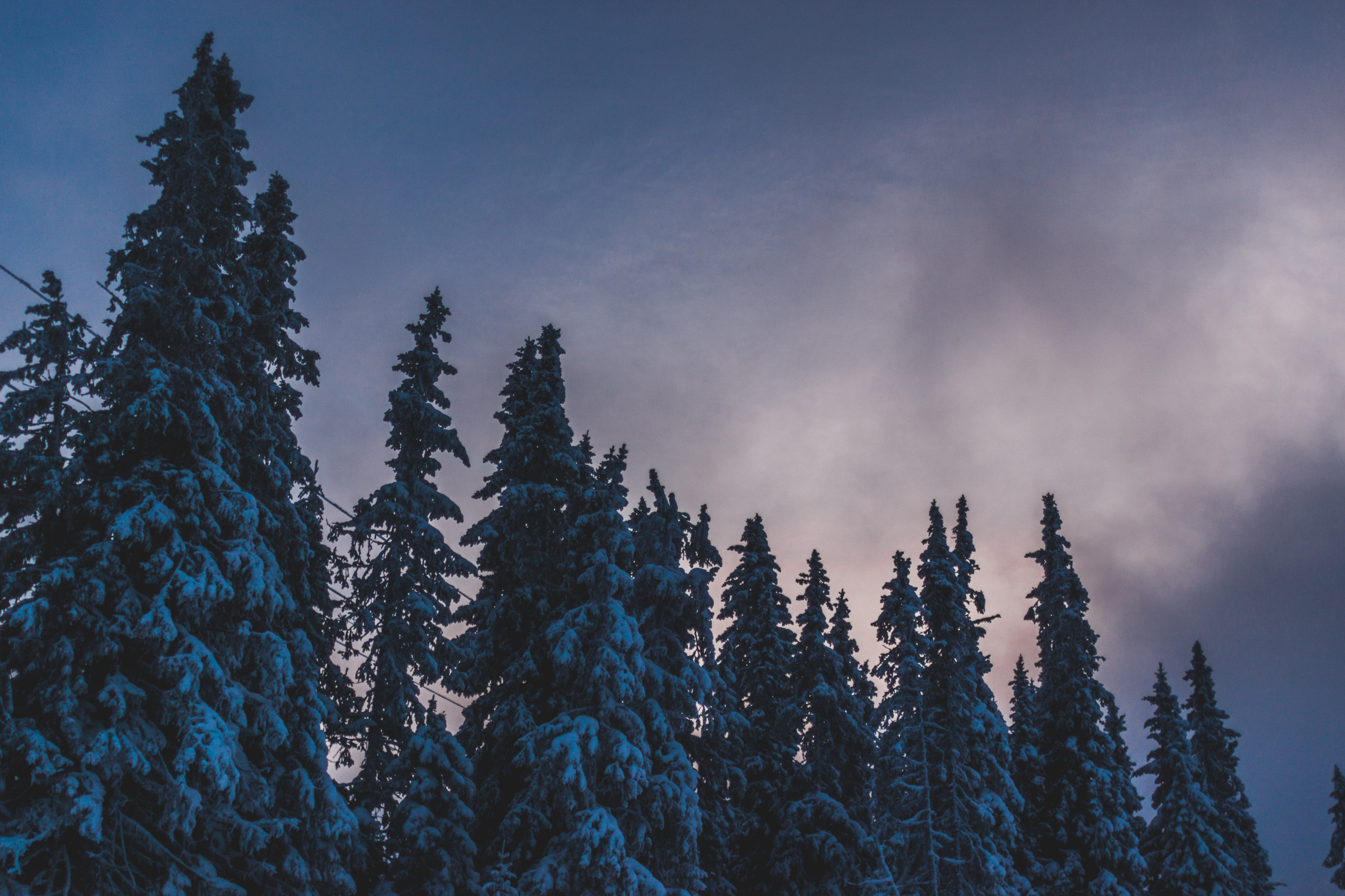 photography of trees coated with snow