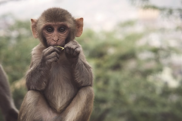 WHAT MONKEYS CAN TEACH US ABOUT MONEY