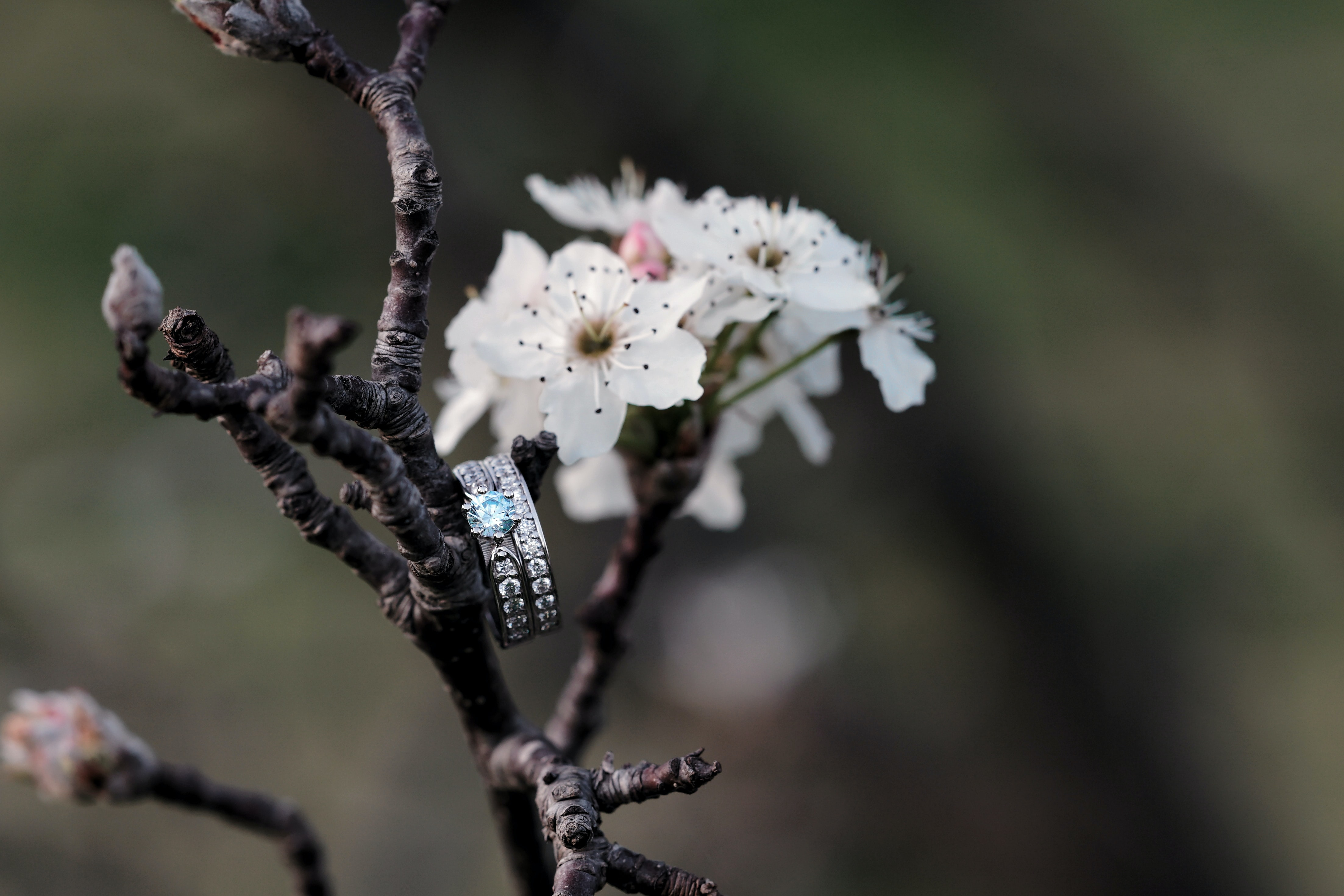 closeup photo of silver-colored ring on branch