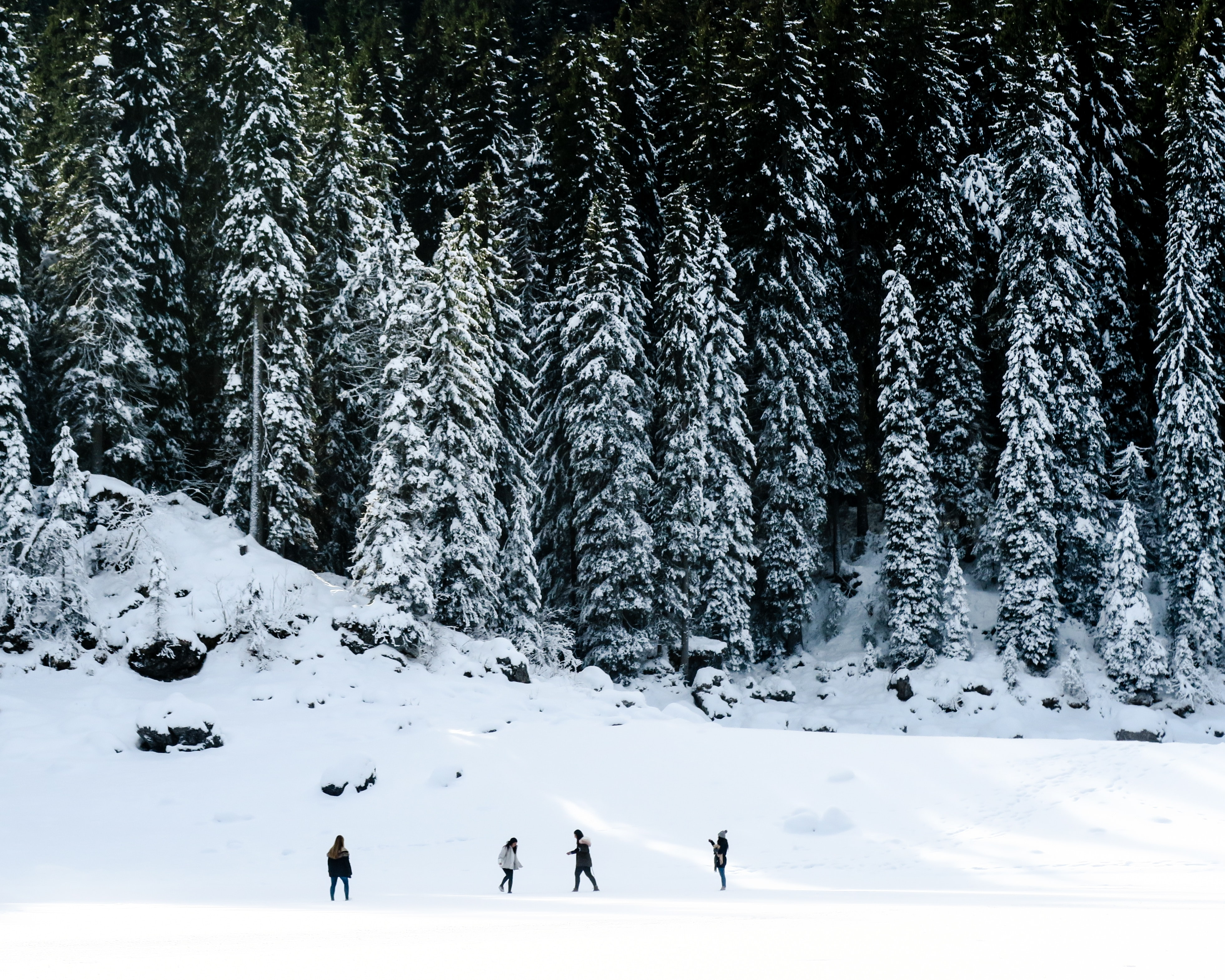 landscape photography of four people playing on snow near pine trees