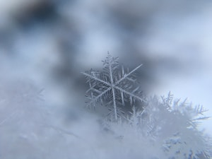 shallow focus photography of snowflake