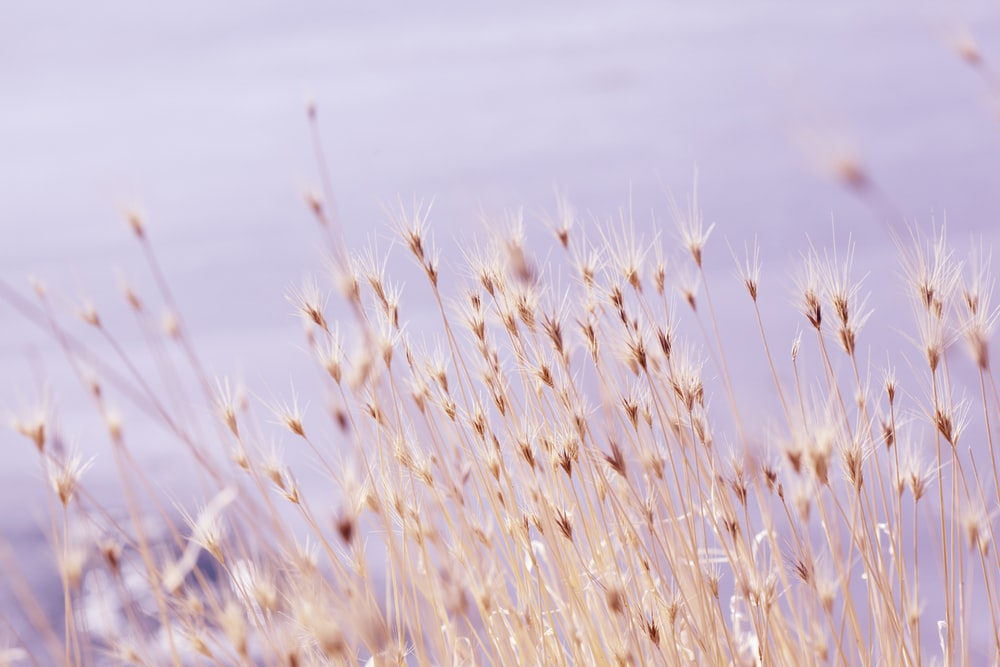 selective focus photography of grass field