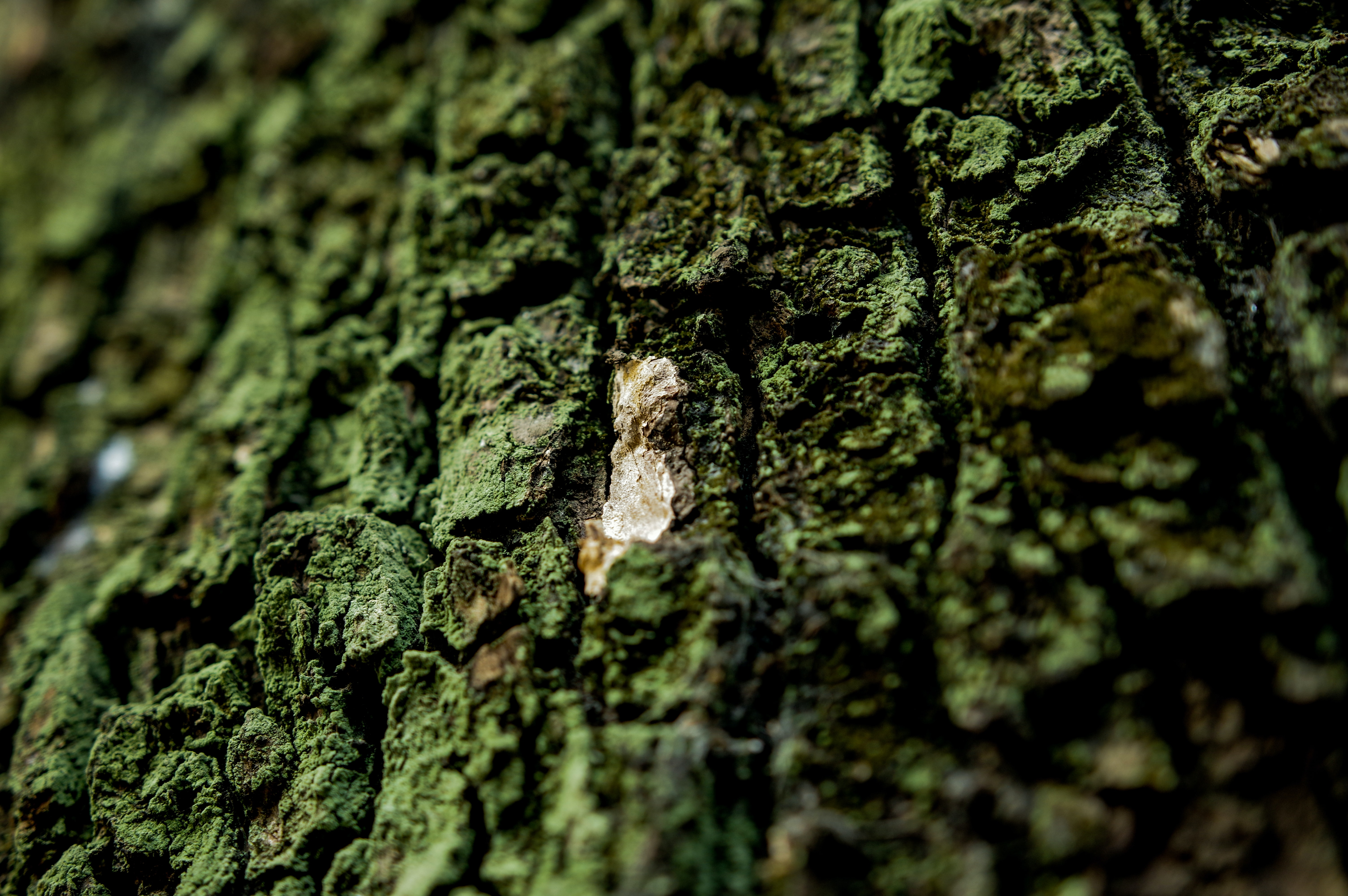 brown tree trunk photography