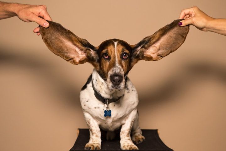 Listen Up! Real Listening and How To Practice It