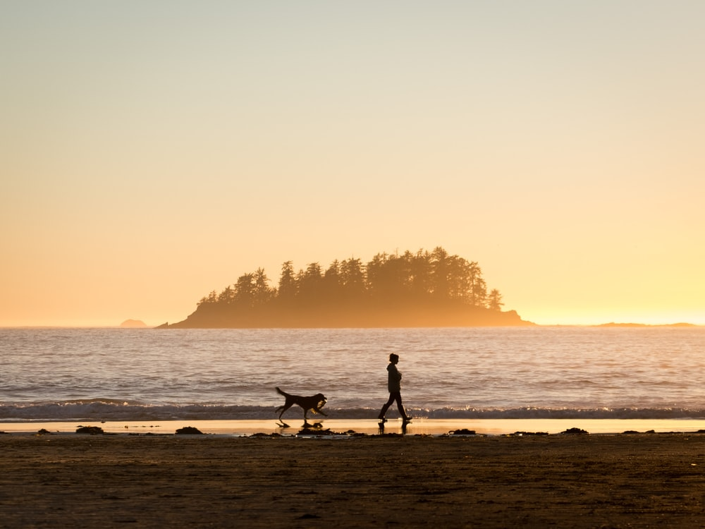silhouette of person in front of dog walking at seashore near island during sunset