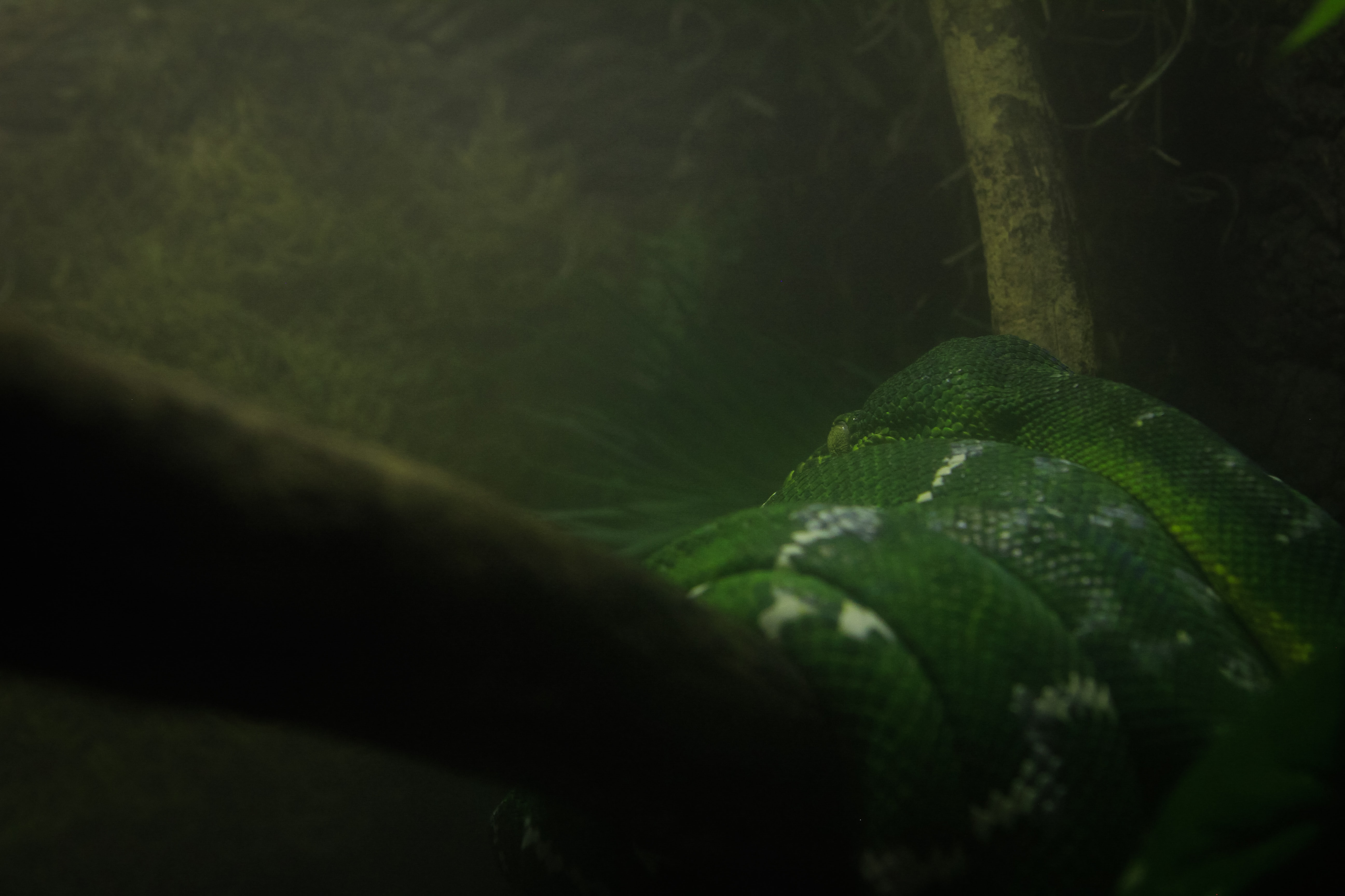 green and white snake