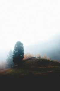 green leafed tree on mountain surrounded by fogs