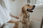 Best Dog Groomers in Mumbai