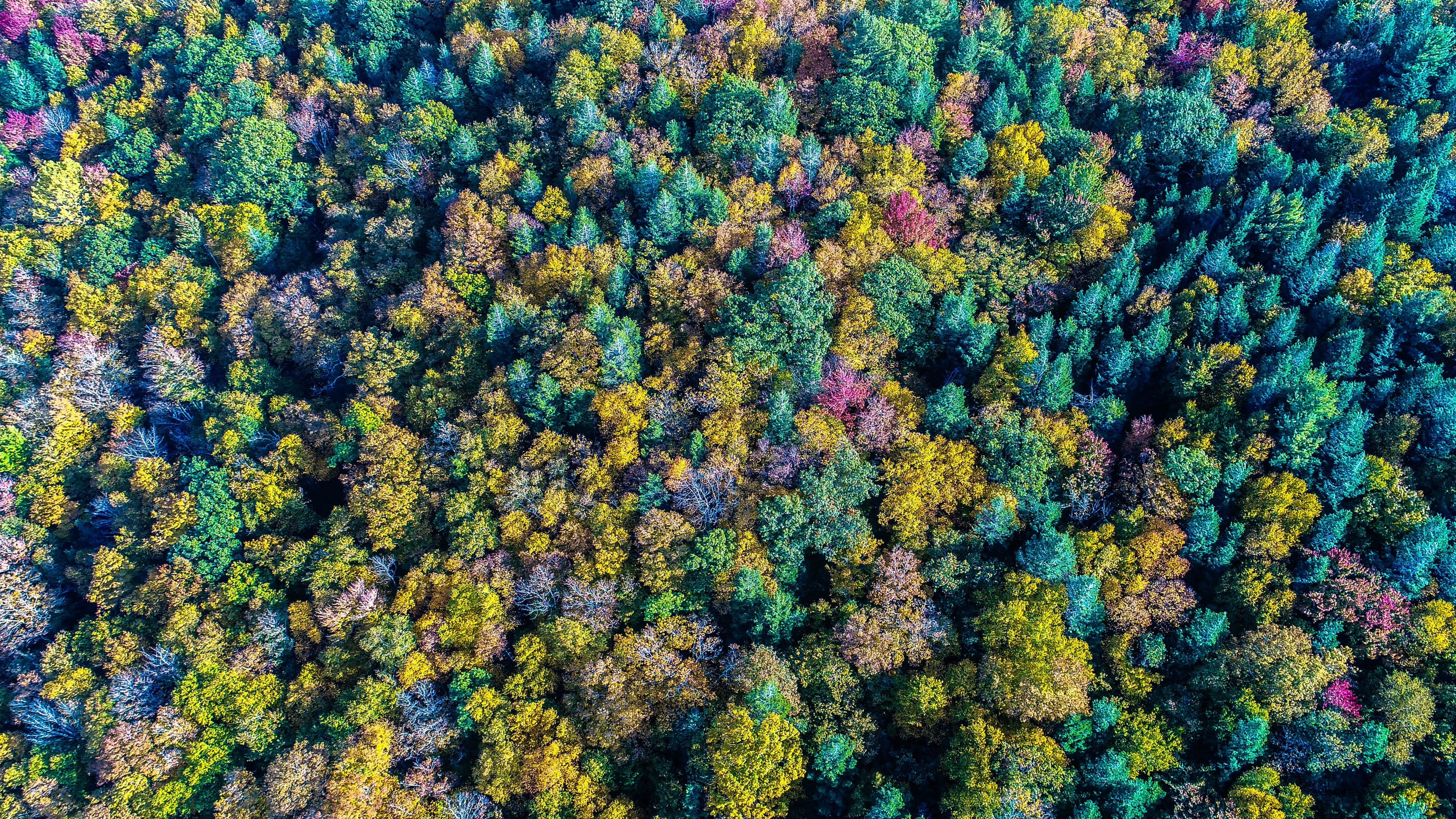 aerial view photo of forest during daytime