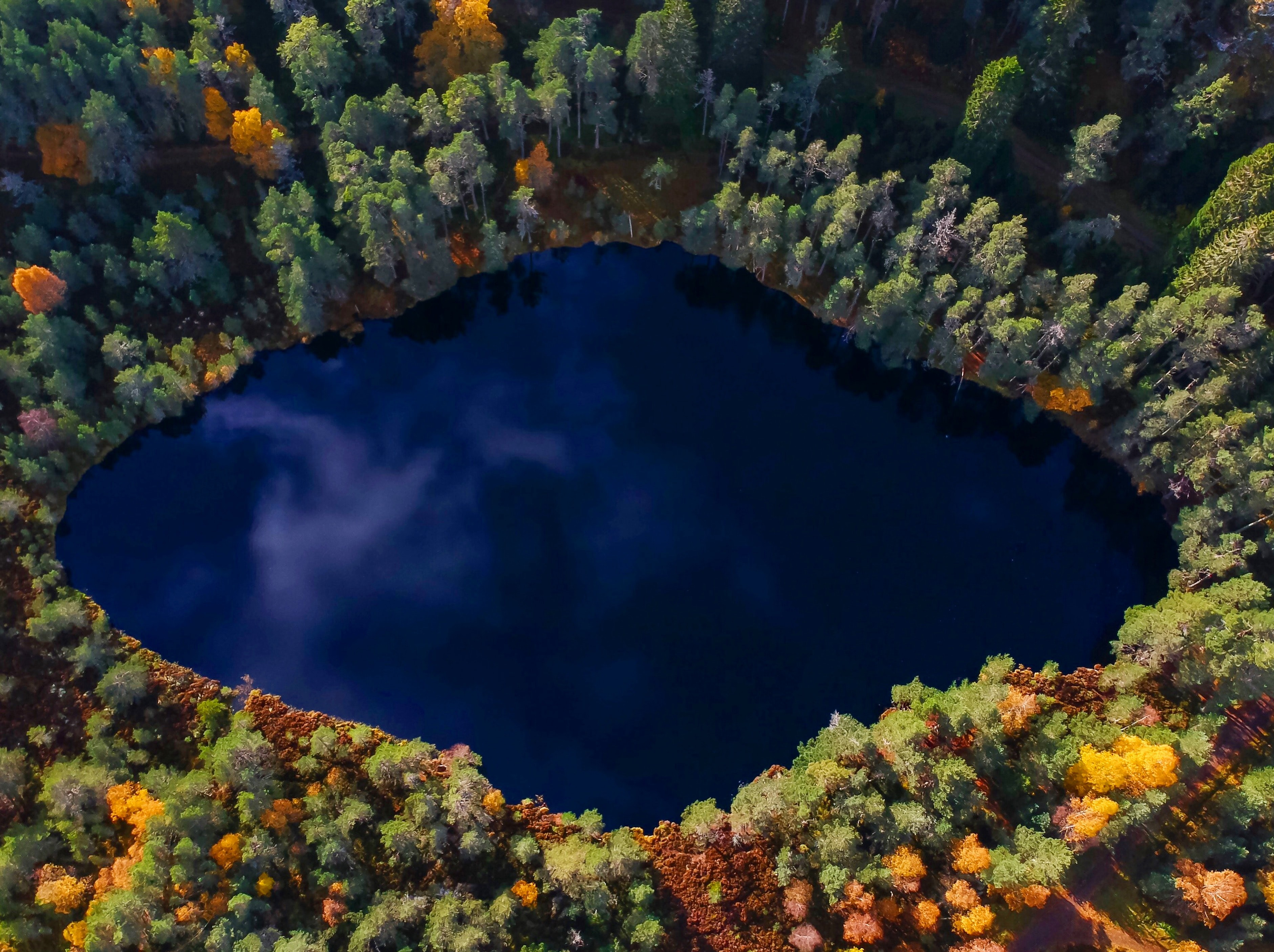 aerial view photography of lake surrounded by trees during daytime