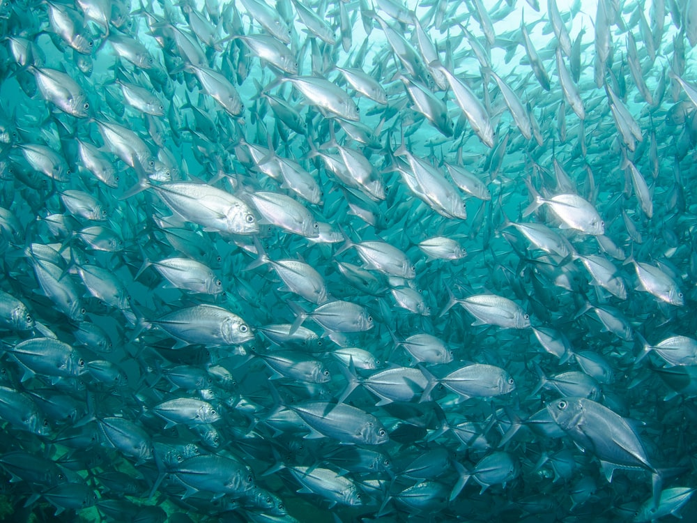 school of fish under body of water