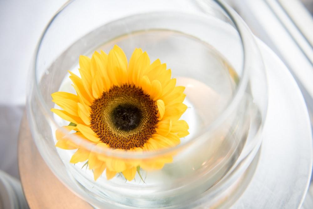 sunflower in glass bowl