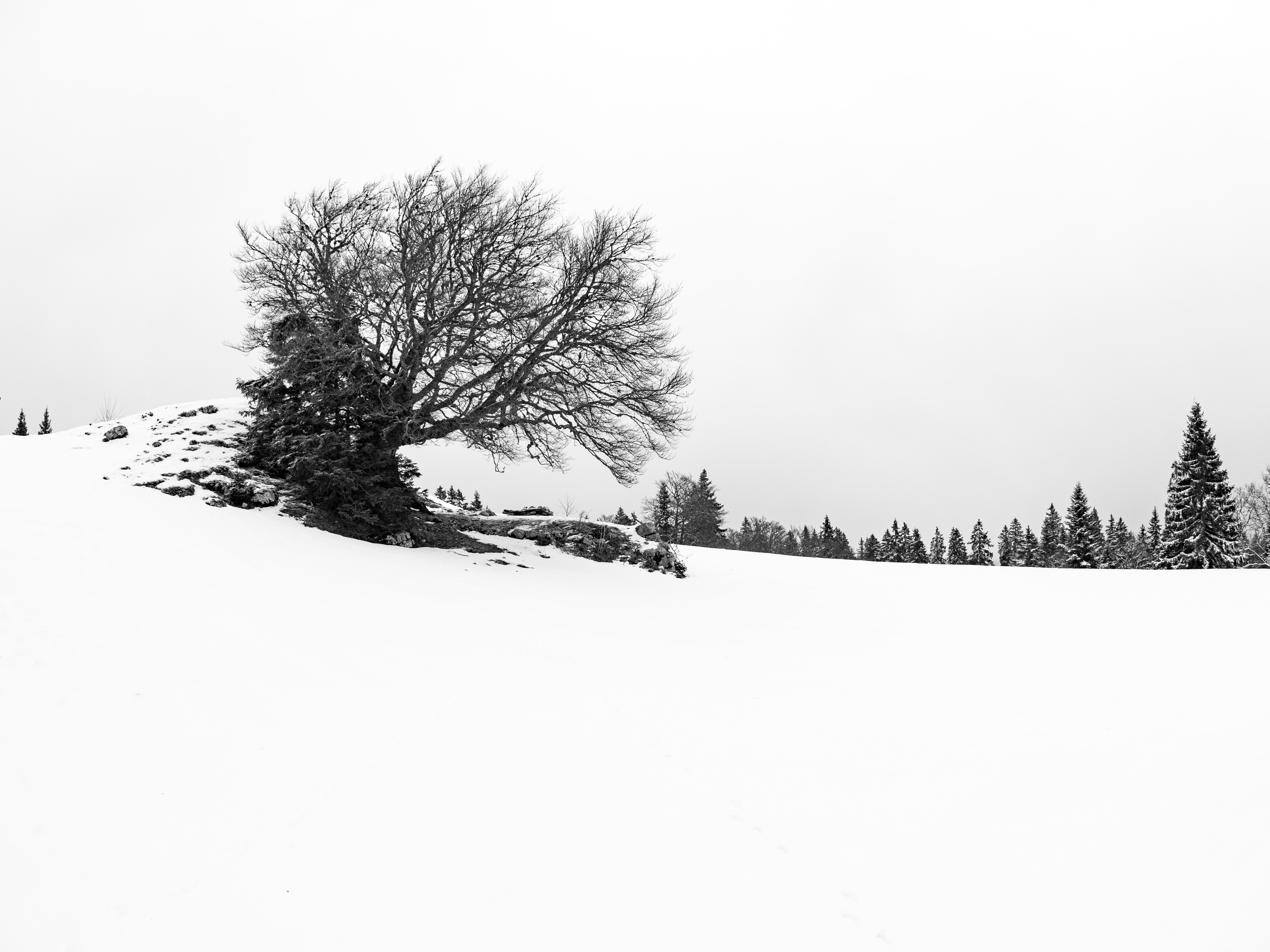 grayscale photography of bare trees on snow field during daytime