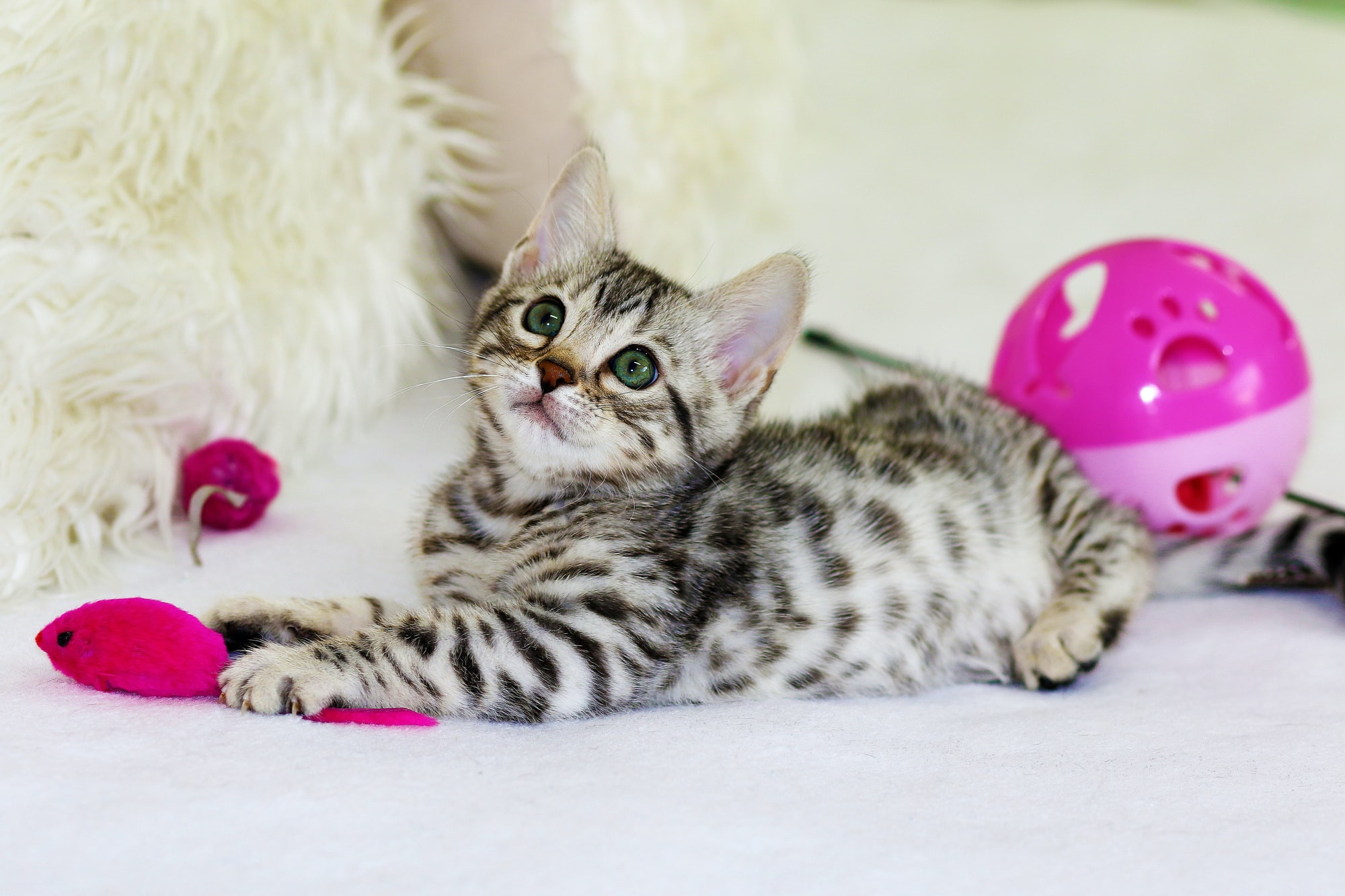 Cat Toys; What Ones Should I Buy?