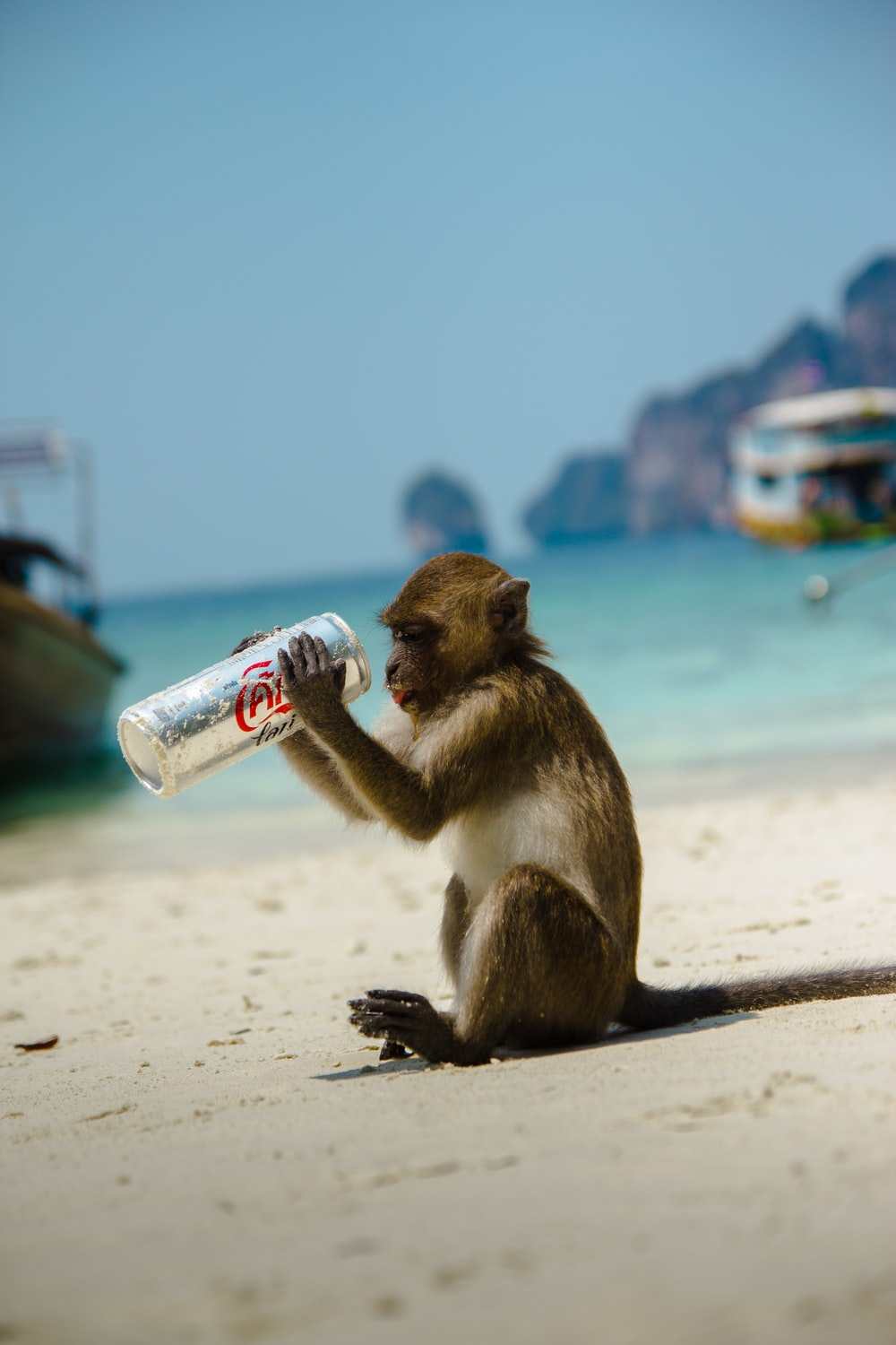 brown primate holding Coca-Cola can