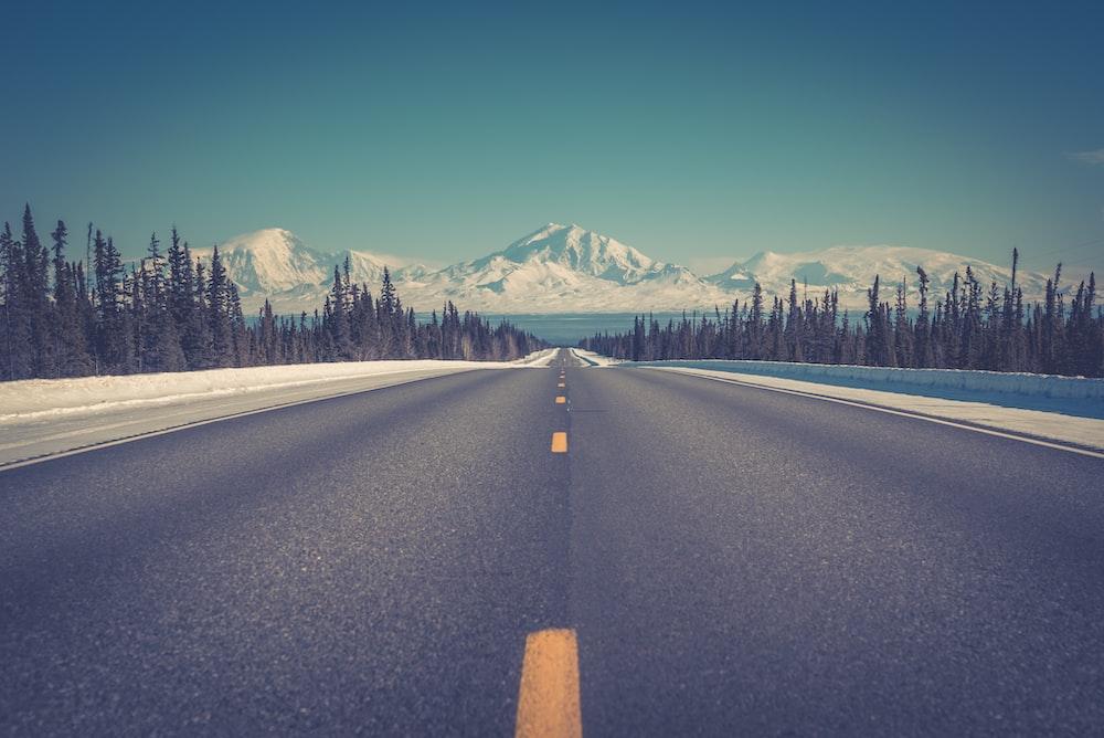 asphalt road between trees under blue clear sky during daytime