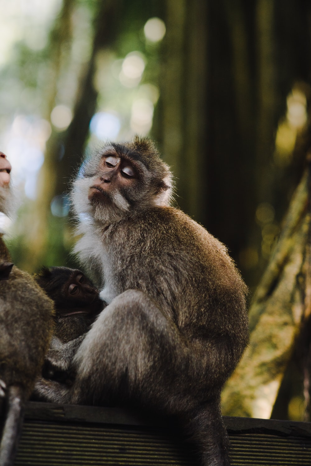 photo of two brown monkey on black surface